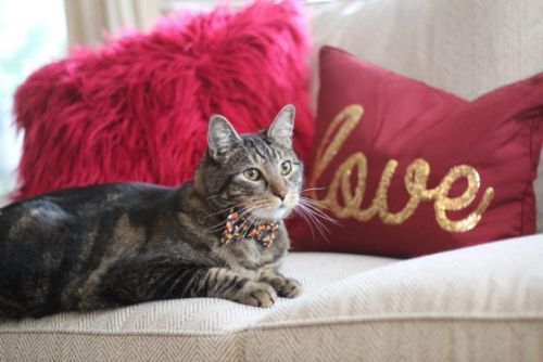 Sundays With Tabs the Cat, Makeup and Beauty Blog Mascot, Vol. 655